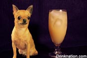 Salty Chihuahua drink recipe